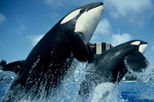 SeaWorld® San Diego Ticket with Transport